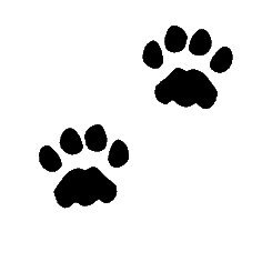 paw-prints-Dog the-cat
